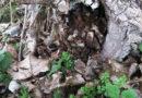 Vorsorglicher Sturmflutschutz: NLWKN entfernt kranke Bäume am Wangerooger Süddeich