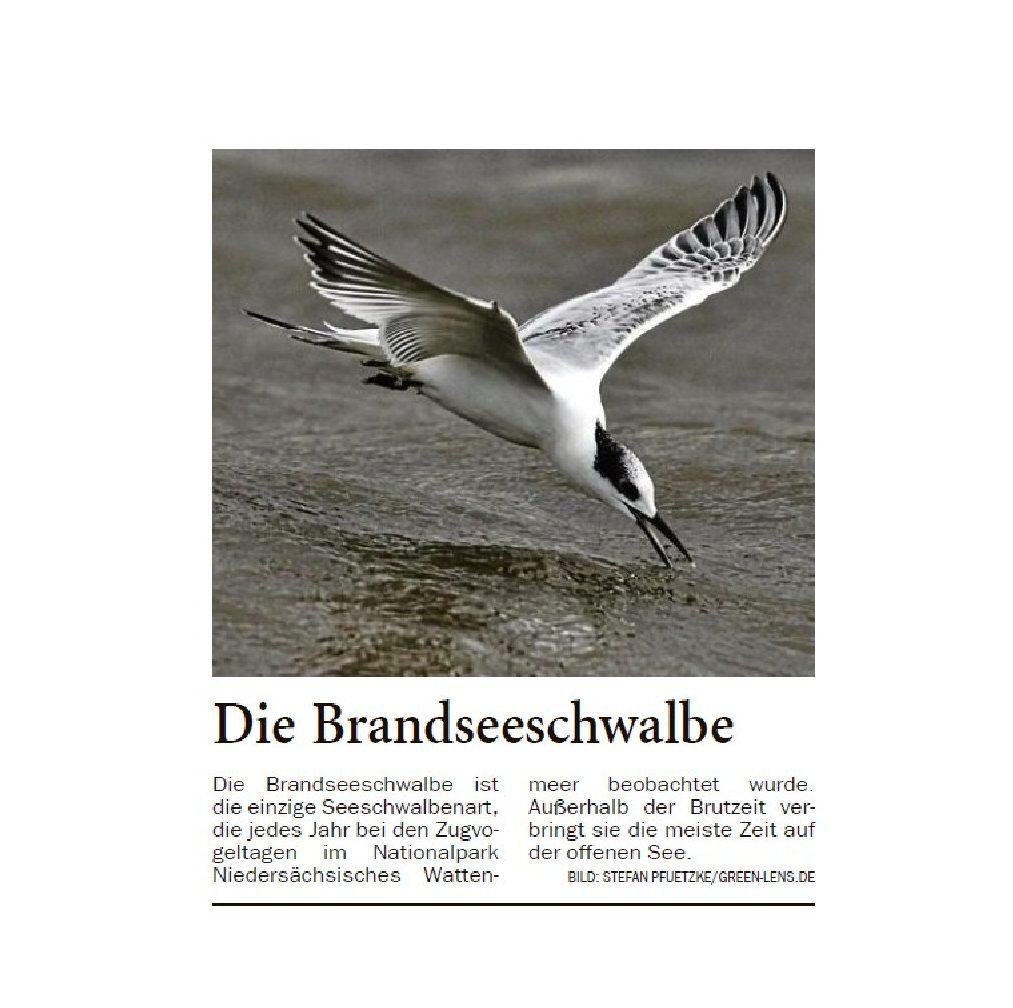 Jeversches Wochenblatt 19.10.2019