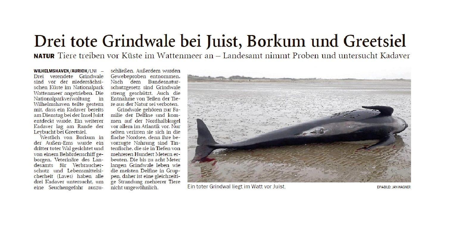 Jeversches Wochenblatt 08.11.2019 II