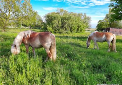 In eigener Sache: Pferdemistkompost ohne Einstreu zu verschenken